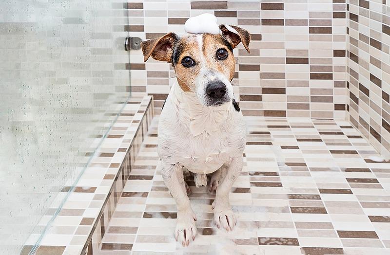 Instalación de una ducha mascota